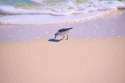 Pensacola_Beach_2015_3