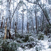 Snowy Mountains Winter 2015