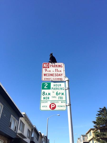 <b>Anza Vista</b> <br>San Francisco, CA <br>November 17, 2015
