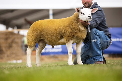 First prize ram lamb from Jim Innes - IJS1501315