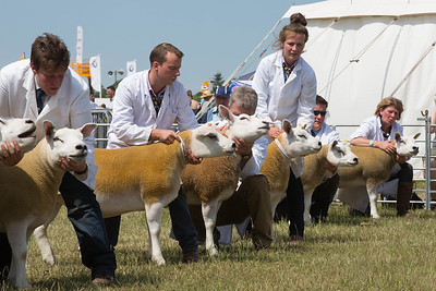 Royal Norfolk Show 2015