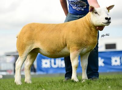 Royal Ulster Agricultural Show, Balmoral, 2015