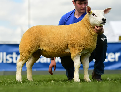 Paul O'Connor's first prize ram lamb