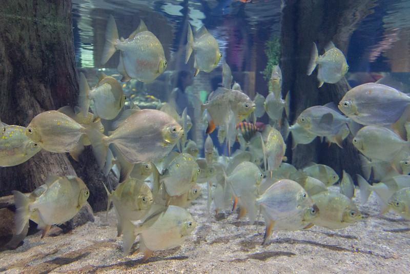 Aquarium and Market