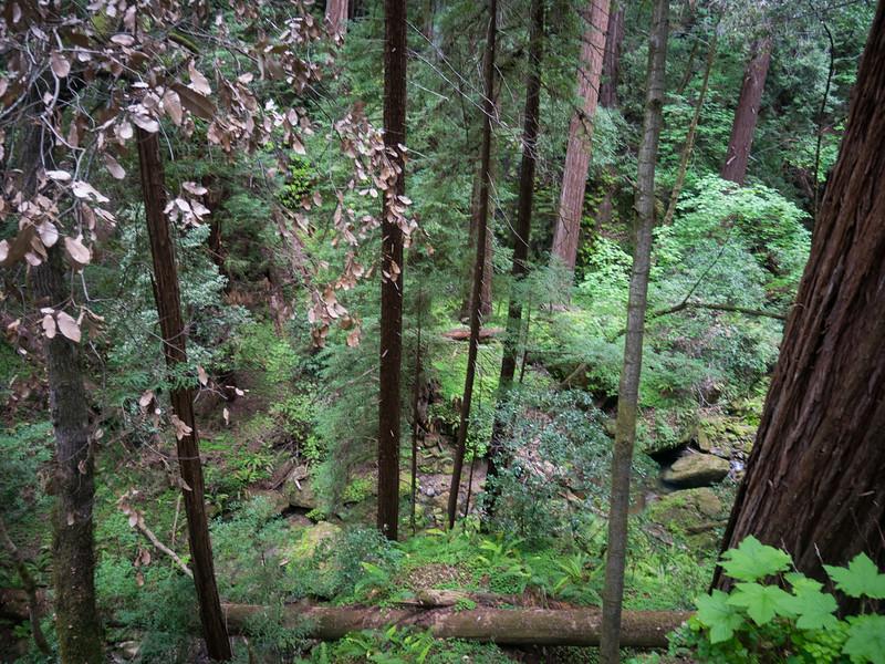 Berry Creek, below
