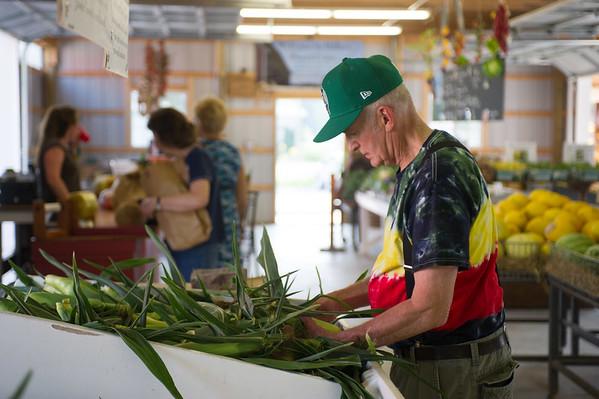 JOED VIERA/STAFF PHOTOGRAPHER-Burt, NY-Charlie Vogel from Eggertsville sorts through corn at Miller's Farm.
