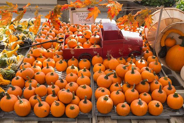 JOED VIERA/STAFF PHOTOGRAPHER-Lockport, NY- Faery's Nursery on South Transit Road displays small pumpkins.