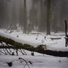Trees among the snow