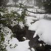 Between snowy banks