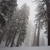 Among snow-covered giants
