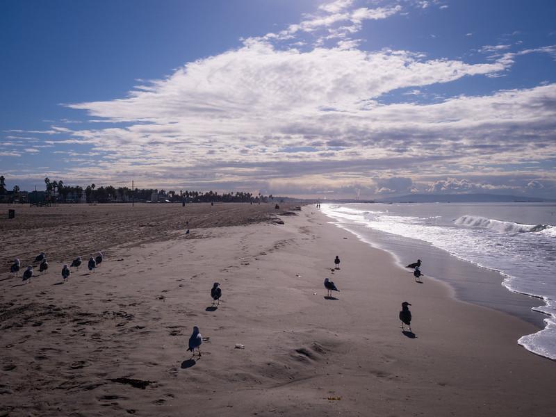Venice beach south