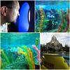 Details on the Finding Nemo Submarine Voyage at Disneyland