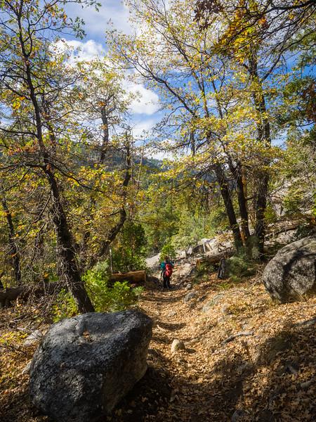 Descending through leaves