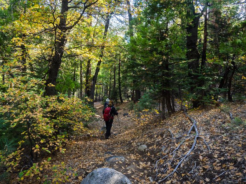 Descending through fallen leaves