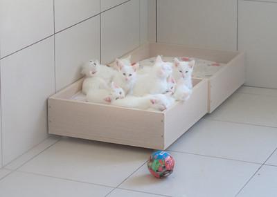 Van cats.