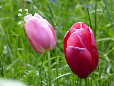 UK_May_2015_043