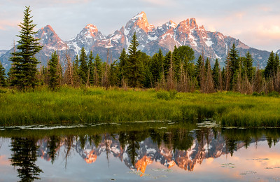 Tetons reflected in a beaver pond.