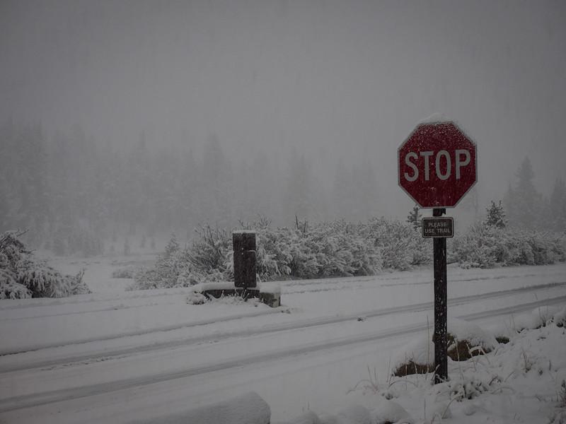 Snowing on Tioga Pass