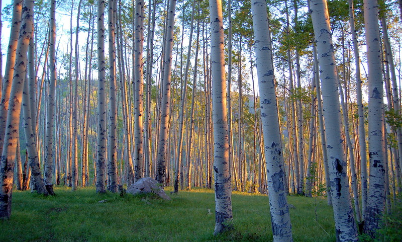 In the Aspens