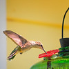 Hummingbird. 5 August, 2015.
