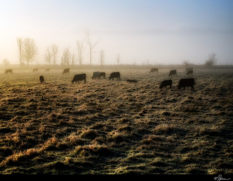 Dans la brume du matin à Gatineau-3