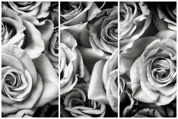 rose triptych