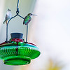 Hummingbird. 6 August, 2015.