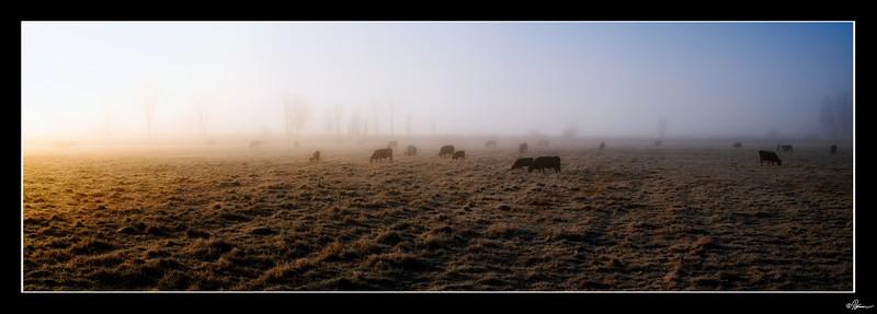 dans-la-brume-du-matin-a-gatineau-3_22930043035_o