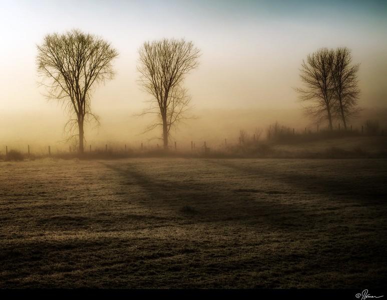 Dans la brume du matin à Gatineau-4