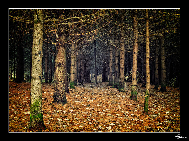 saint-andre-avellin-sentier-de-lauberge-5_23604923306_o