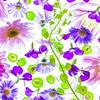 scattered petals