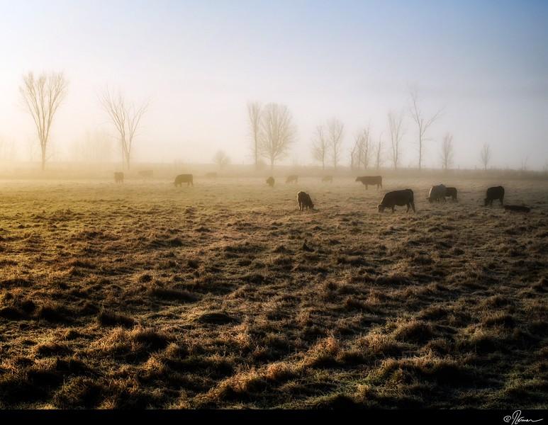 Dans la brume du matin à Gatineau-2