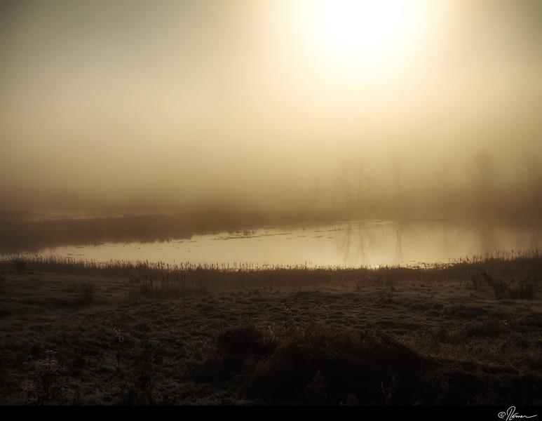 Dans la brume du matin à Gatineau-5