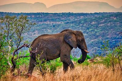 Africa - 2015