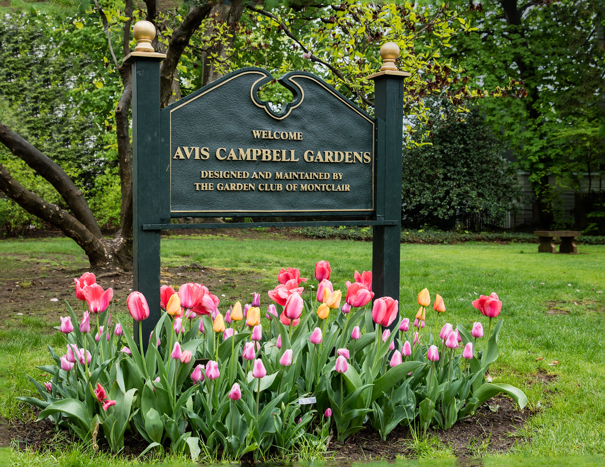 Welcome to Avis Campbell Garden