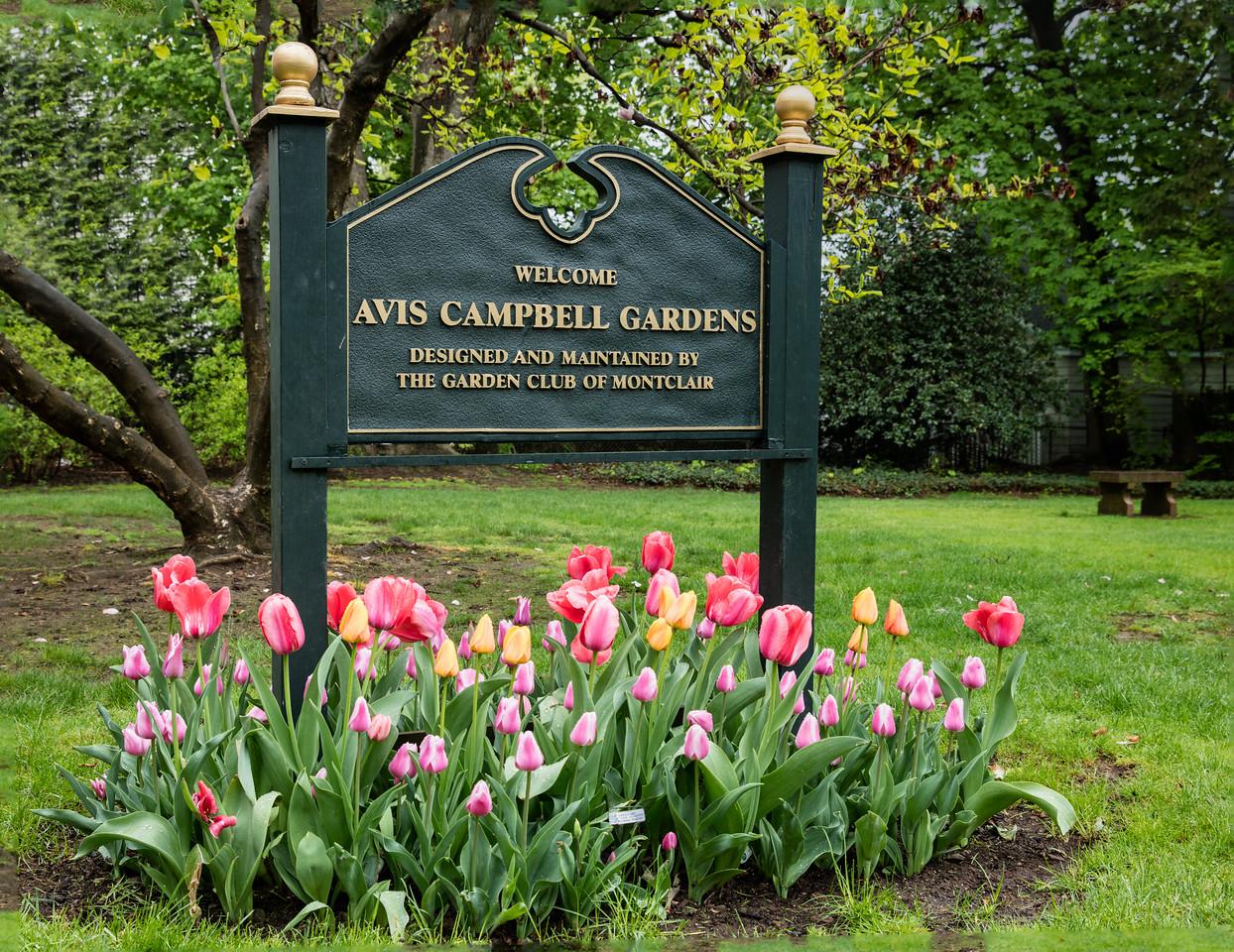 Welcome to Avis Campbell Garden