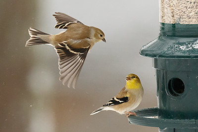 Approaching the Feeder