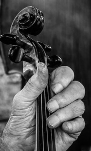 Fiddlers Hand - Honorable Mention