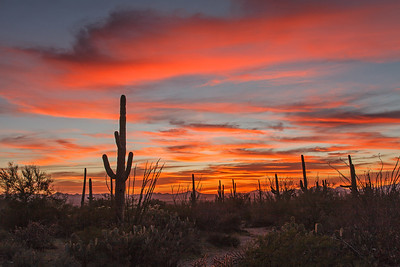 Saguaro Park Sunset