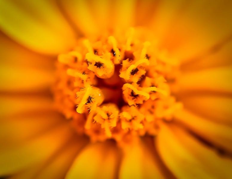 Sun Fluer