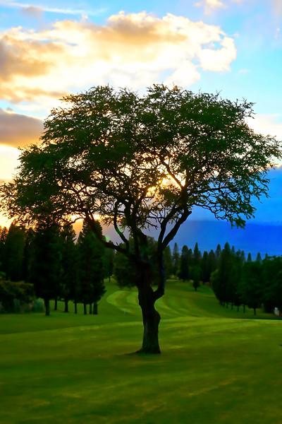 5th Tree