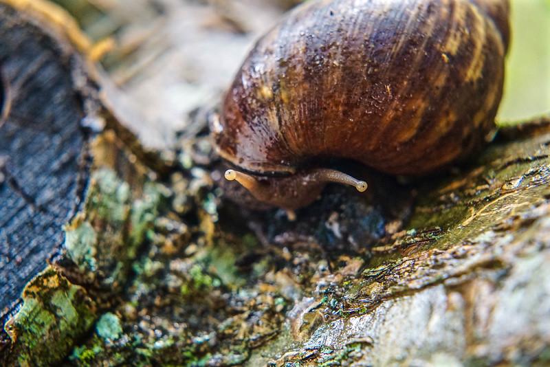 Snail Snell