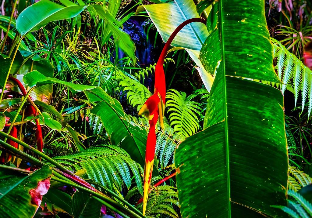 Bird od Paradise Falls