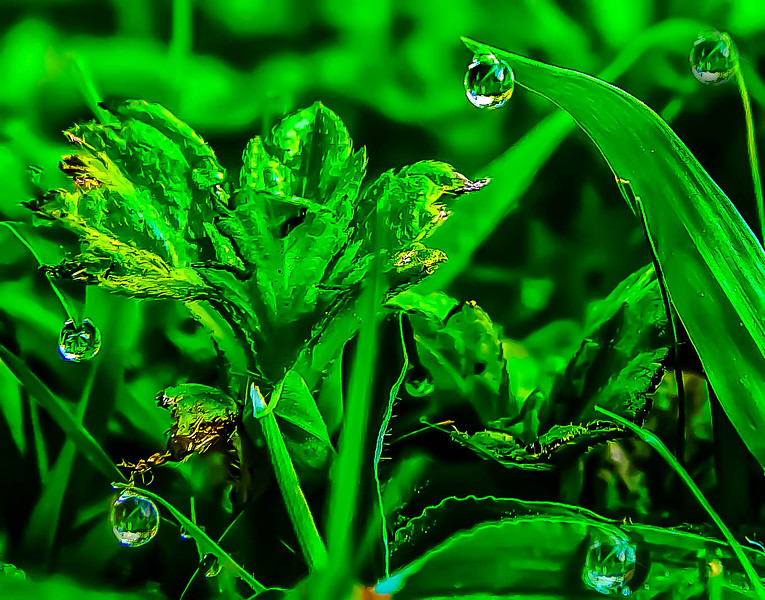 Morning Dew Drop
