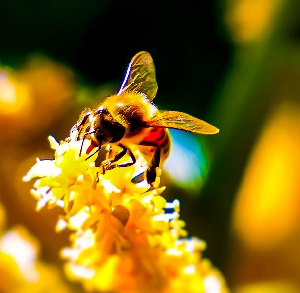 Palm Bee 2