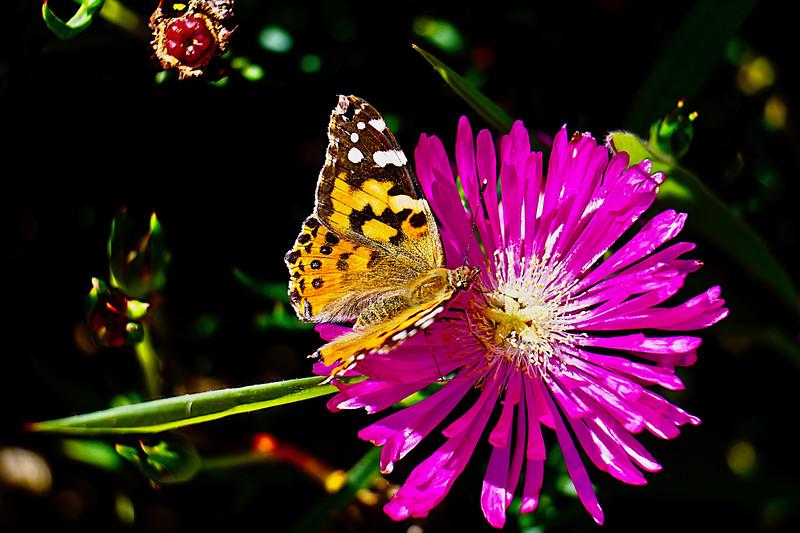 Flutter Flower