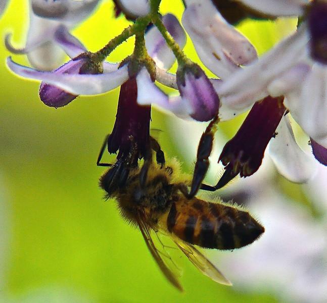 Upside Down Pollen