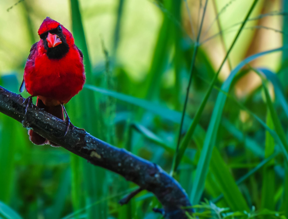 Stern Cardinal
