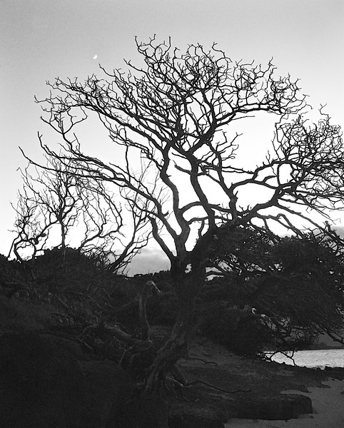 One Tree Moonrise