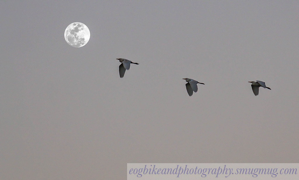 3 Birds And 1 Moon
